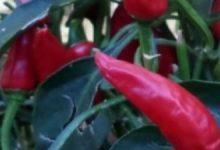 OPAlbenga –  le spezie dalla Liguria