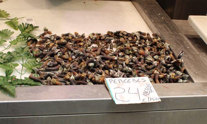 Percebes, tipici crostacei - Mercato di Atarazanas, Malaga