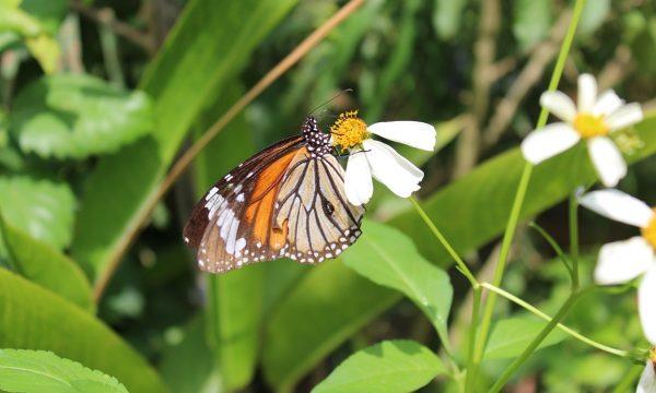 Chiang Mai – tra orchidee e farfalle