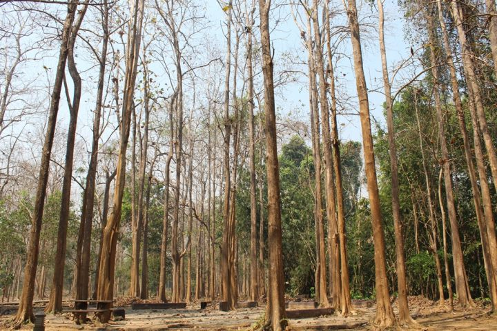 La natura nel Parco Say yok